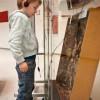 2013: Dissoziierte Plastik I -die Tauben, die glauben, was sie hören- Ausstellung der Kassenärztlichen Vereinigung Bremen, Januar 2014